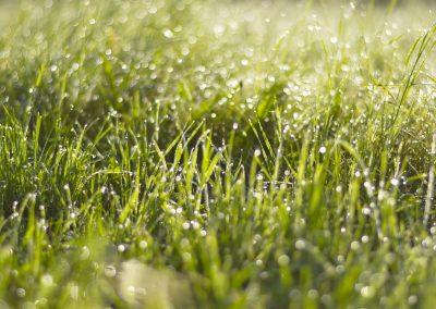 grass-1814707